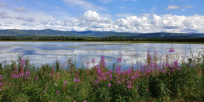 Yukon, yoga retreat, fireweed